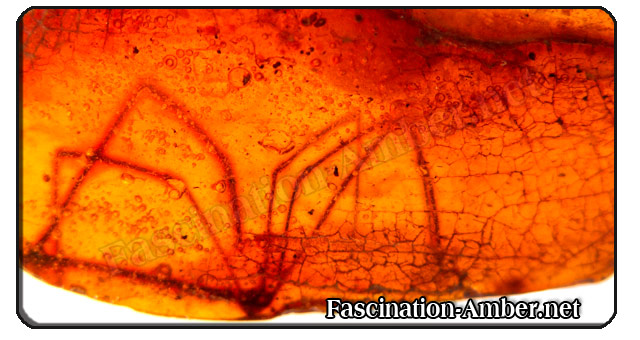 Amber inclusions - spider